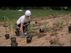 This video by GreenTreks Network shows how a township acquired an abandoned landscaping property and took the opportunity to benefit the local community in multiple ways. The result was Koontz Park, a beautiful recreational area that offers lessons in landscaping, native species, and managing runoff from storms. The holistic vision became a reality because many partners contributed to the effort by sharing their expertise, personal passions, and willingness to get dirty and sweat.