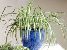 """easy to care for """"indoor"""" plants.  since i can even kill a succulent"""