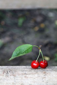 Awesome photo of Cherries! Brilliant colors... Someday I will see a Cherry Tree in person <3 #Cherries