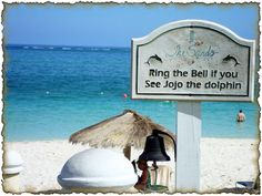 Look out for JoJo the Dolphin around Grace Bay Beach!!!