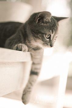 grey cat   ...........click here to find out more http://googydog.com    P.S. PLEASE FOLLOW ME IN HERE @Yulia Bekar Bekar Bekar watson