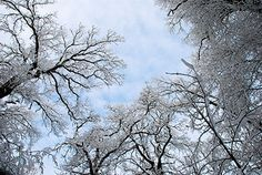 The benefits of #trees last all year long--all four seasons included.