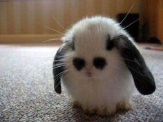 emo bunni, rabbits, funni, baby bunnies, cutest animals, ador, pandas, eye, thing