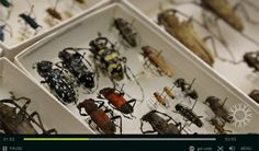 Now you can Help Digitize Insect Collections from your own Home-The Entomological Society of America
