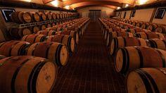 Chianti Wine Tasting and Cellar Tour
