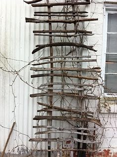 limbs and twigs make a primitive garden trellis...