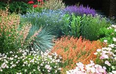 Love the colors of this xeriscape. #gardening #xeriscape