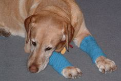 Crocheted Dog Leggings - free crochet pattern