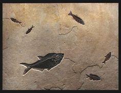 #Fossils #fish