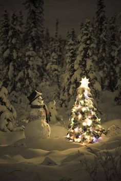❄I would love to be out walking in the woods and happen upon this!!!!