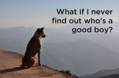 Dogs And Their Secret Thoughts..
