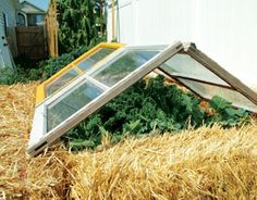 Year-Round Gardening:  Our Best Plans for Greenhouses, Hoop Houses,  Cold Frames and More