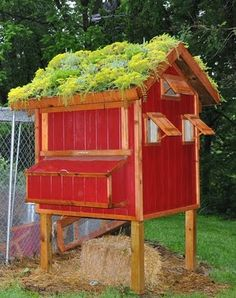 Chicken coop w/ a green roof. <3