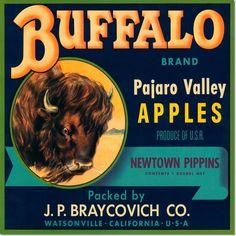 Antique Vintage Art Fruit Crate Label - 059 - Buffalo Pajaro Valley Apples fruit crate, appl crate, crate art, buffalo appl, crate label, apple crates, apples, vintag label, vintage art