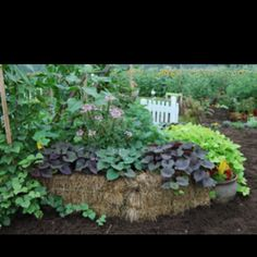 How to make a straw bale garden