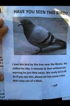 Bird Humor: Have you seen this bird? Funny