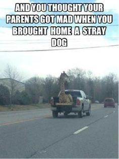 beats, anim, dogs, dream come true, buckets, funniest thing ever, giraffe humor, joke, bucket lists