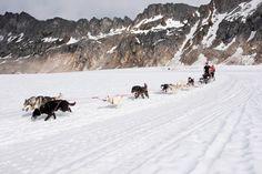 Dogsledding through Alaska.
