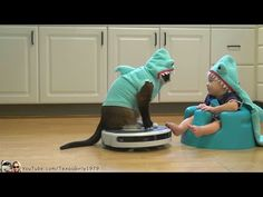 This Cat Dressed As A Shark Riding A Roomba With A Shark-Baby Is The Zen You Need Today