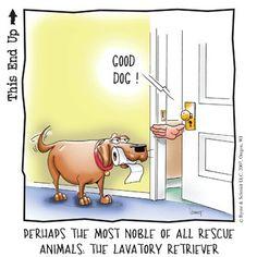 anim, funni stuff, funny pics, laugh, dogs, lavatori retriev, funny quotes, humor, friend