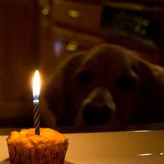 Apple & Cheddar Pupcakes for Einstein's 4th Birthday!