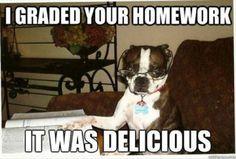 home-work-dog