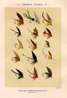 trout flies glorious fly fishing print no 3.