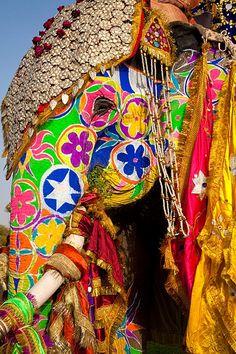 elephant festival, jaipur, rajasthan, india