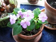 Overwintered Plants: What To Do Now