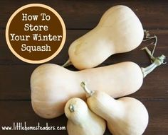 Five Little Homesteaders: How to Store Your Winter Squash