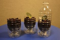 cheap African violet starting plant pots using water bottles