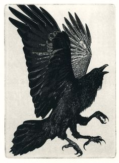 """Crows Ravens:  """"#Raven."""""""