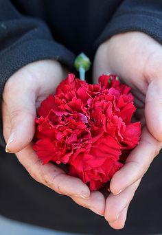 HAPPY VALENTINE'S DAY! John Barrington Dianthus