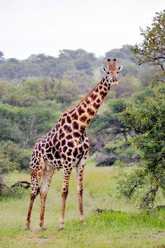 On Safari in Kruger, South Africa | lark&linen