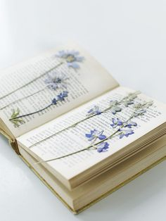 Dried Flowers in the Book