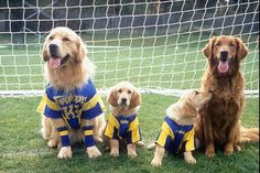 Air Bud: Golden Receiver and Air Bud 3: World Pup (above), featured a variety of dogs playing football and soccer.