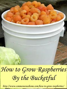 How to Grow Raspberries: Raspberry Growing Requirements - Soil, Location, Water, Mulch. Difference between Summer Bearing and Fall Bearing Raspberries.