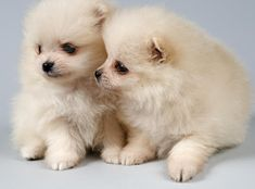 puppies, dogs, pin puppi, knitting patterns, diets