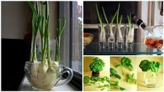 10 Vegetables You Can Regrow Indoors plant, hous remodel
