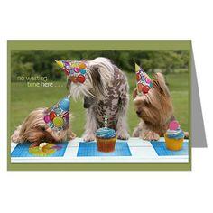 Yorkie birthday party! too cute