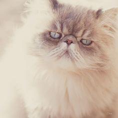 Beautiful!  #cat