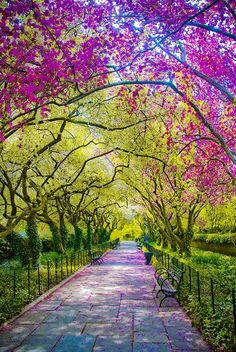 Spring - Central Park, New York City