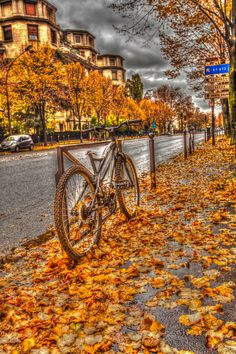 ~ Autumn leaves turn to gold ~ Paris cityscape