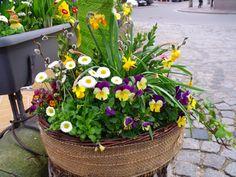 Flower pot garden in front of a restaurant in Bamberg Germany on Easter morning.