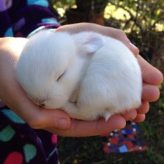 11 day old baby bunn