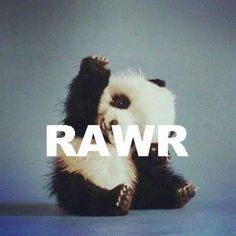 RAWR panda bear high five, baby pandas, animals, heart, faith, bears, baby girls, love quotes, kid