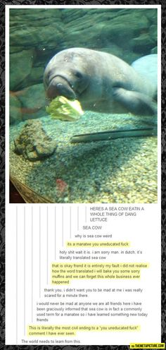 tumblr is sometimes strangely civil...and also you can totally call a manatee a sea cow. I would know, man.