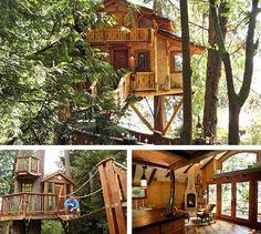 idea, dream homes, tree houses, treehous, dream hous, trees, place, swiss family robinson, live