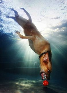 Underwater Dog Photography - Seth Casteel, Looks like our Rosie.