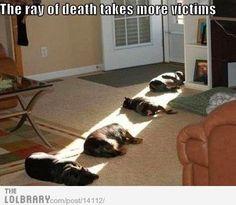 anim, cat, funny dogs, funni, pet